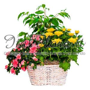 Composizione di piante fiorite